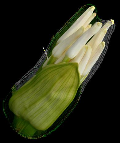 tubes_fleurs_tiram_782