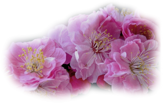 tubes_fleurs_tiram_190
