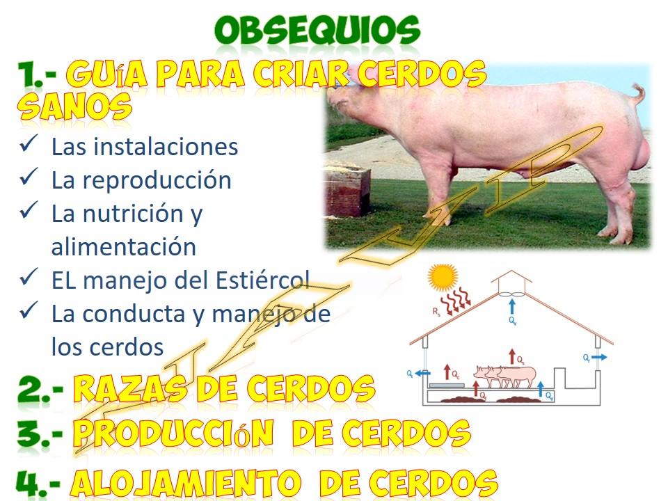 Diapositiva11_zps57vojwpj