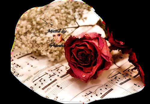 tubes_fleurs_tiram_909