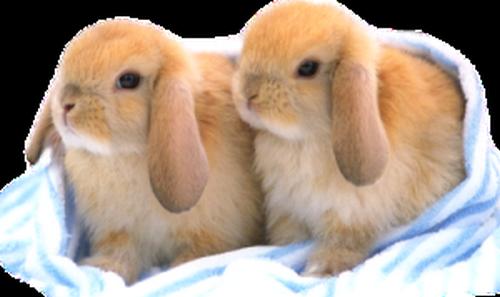 lapins_paques_tiram_112