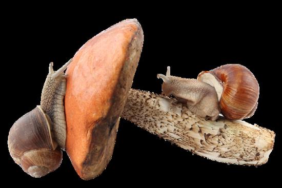 tubes_escargots_tiram_48