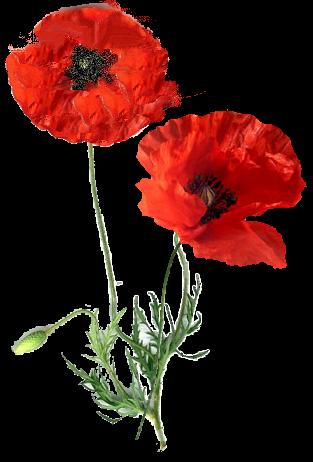 tubes_fleurs_tiram_932