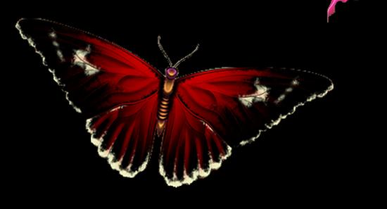 tubes_papillon_tiram_827