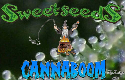 El Brujo a Latigazos ...(Sweet Seeds)+(CannaBooM)(2018) Logo_y_sweet_seeds