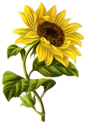 fleurs_paques_tiram_256