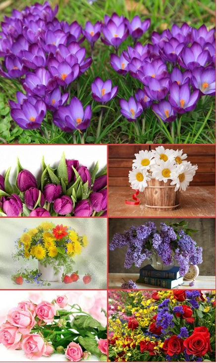 HQ Wallpapers Beautiful Flowers part 43