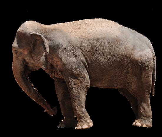 tubes_elephants_tiram_289