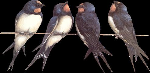 tubes_oiseaux_tiram_246