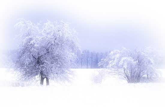 paysage_tiram_839