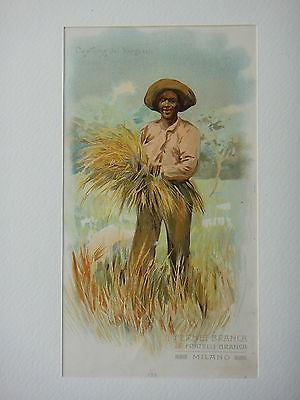 1910_circa_COSTUME_DEL_TRANSVAAL_SUDAFRICA_FERNET_BRANCA_Milano