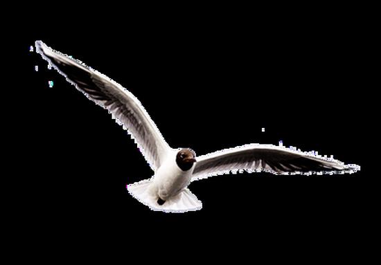 tubes_oiseaux_tiram_14