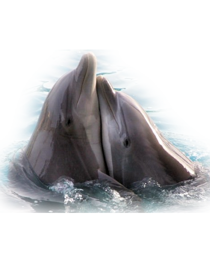 tubes_dauphins_tiram_139