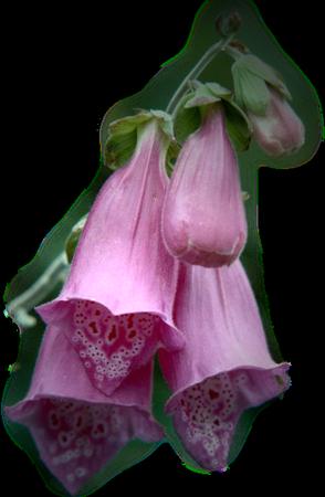 tubes_fleurs_tiram_740