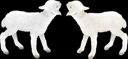 mouton_tiram_66