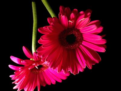 tubes_fleurs_tiram_847