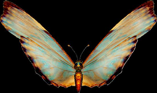 tubes_papillon_tiram_830