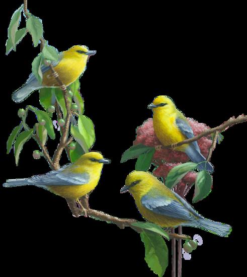 tubes_oiseaux_tiram_142