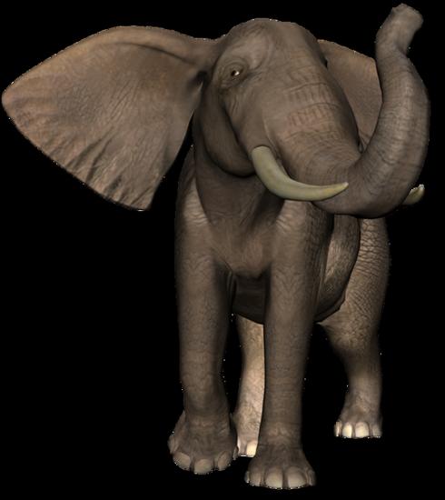 tubes_elephants_tiram_373