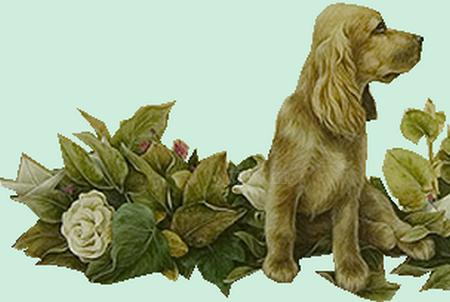 tubes_chiens_tiram_17