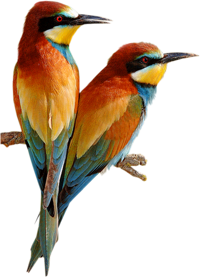 tubes_oiseaux_tiram_47