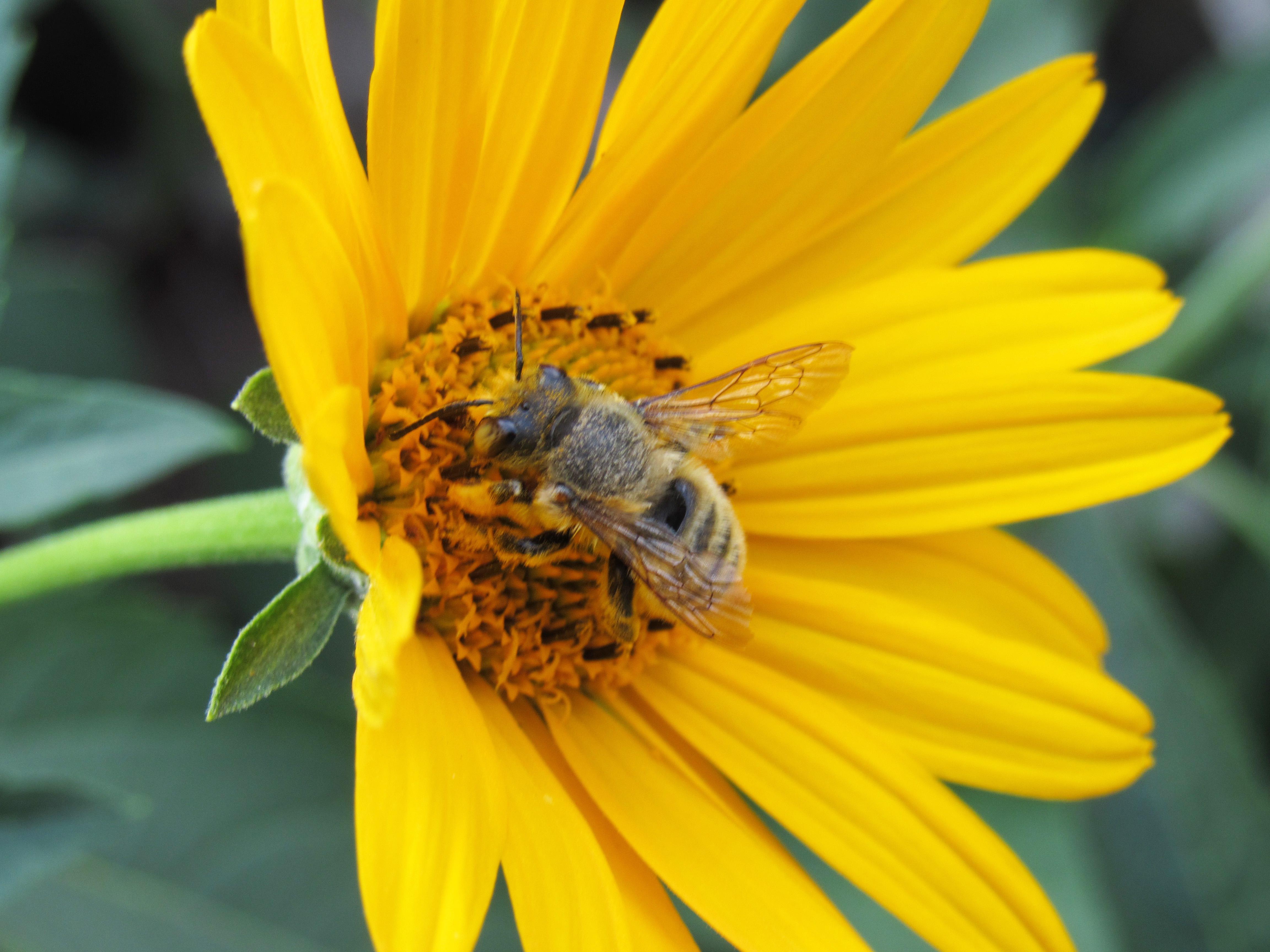 Фото пчелки трудяги открытки импровизаций поиска