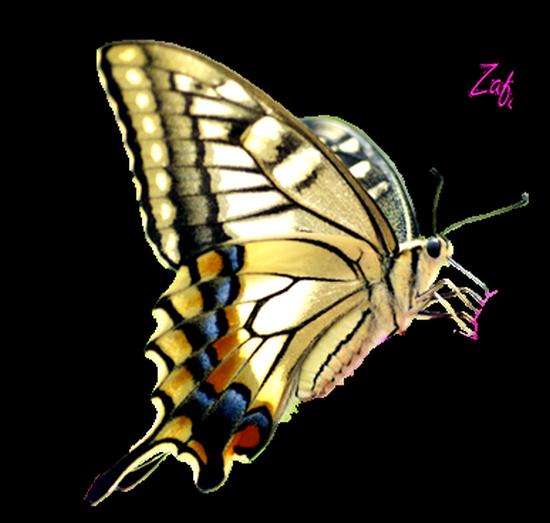 tubes_papillon_tiram_774