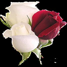 tubes_fleurs_saint_valentin_tiram_146