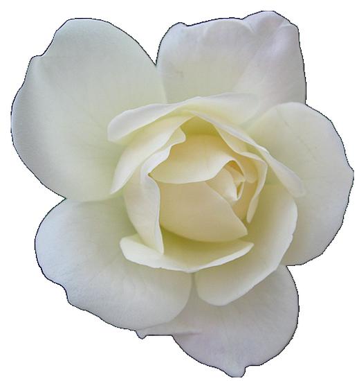 tubes_fleurs_tiram_510