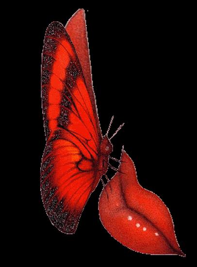 tubes_papillon_tiram_788