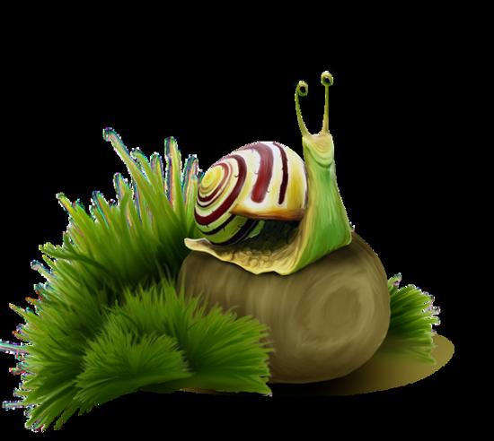 tubes_escargots_tiram_105