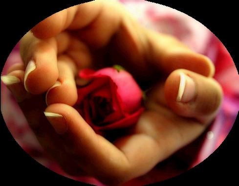 tubes_fleurs_saint_valentin_tiram_52
