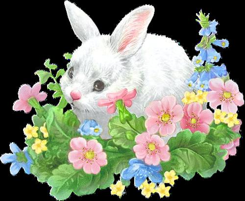 lapins_paques_tiram_1123