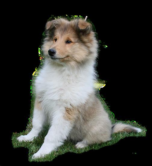 chien_tiram_108