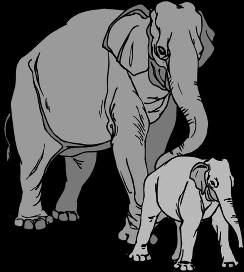 tubes_elephants_tiram_247