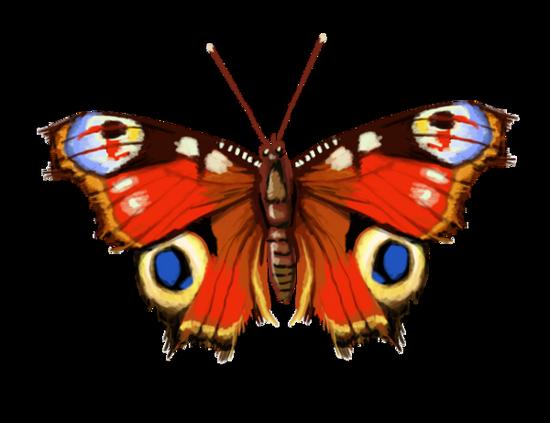 tubes_papillon_tiram_112
