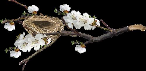 fleurs_paques_tiram_167