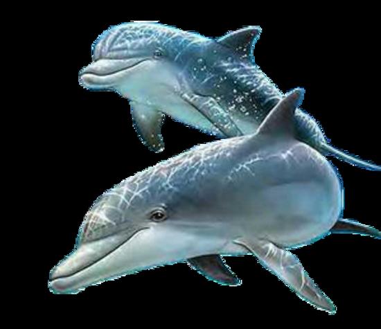 tubes_dauphins_tiram_144