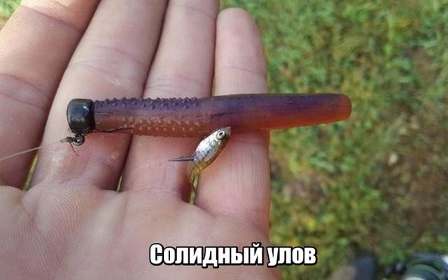 Солидный улов