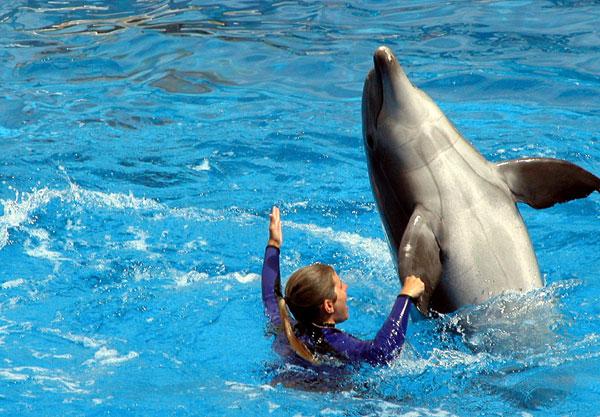dolphin_at_aquarium
