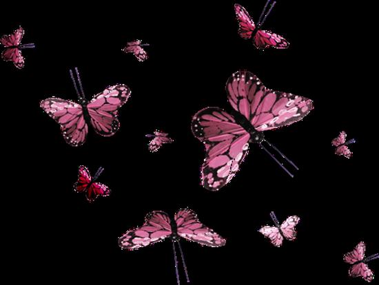 tubes_papillon_tiram_337
