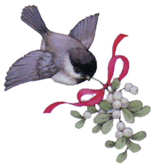 tubes_oiseaux_tiram_56