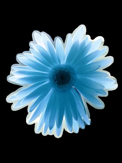 tubes_fleurs_tiram_472