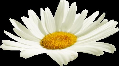 tubes_fleurs_tiram_551