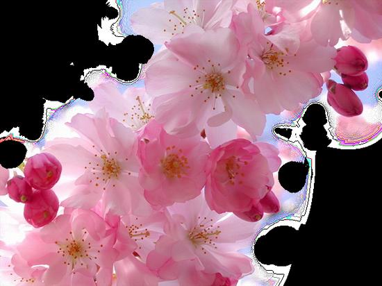 tubes_fleurs_tiram_446