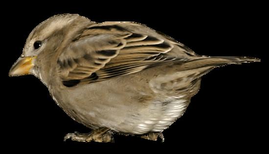 tubes_oiseaux_tiram_126