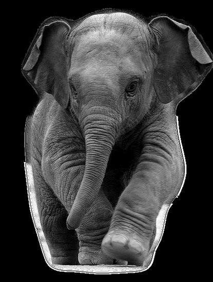 tubes_elephants_tiram_274