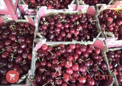 Cherry picking, manual selection in 2kg boxes, u pick cherries