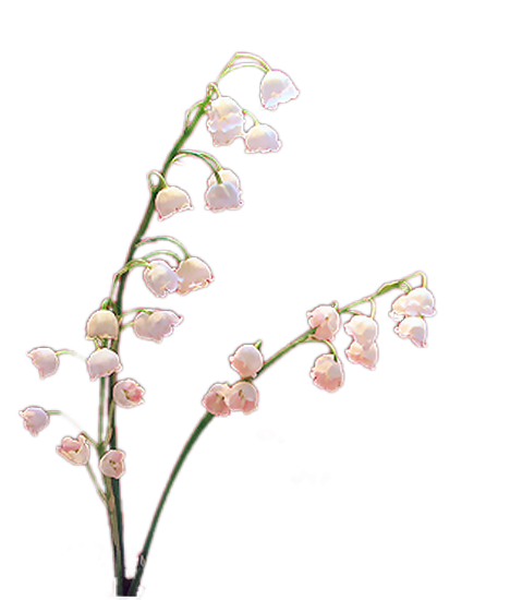 tubes_fleurs_tiram_172