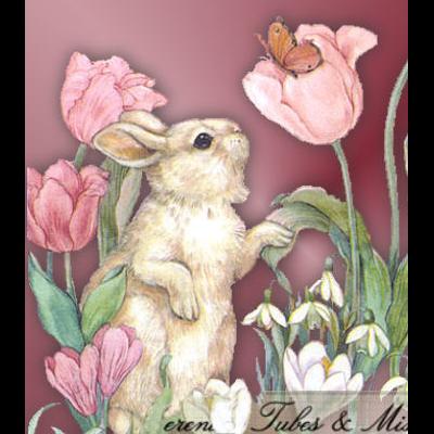 lapins_paques_tiram_1020